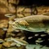 魚のスレを科学する4 腹ペコなサカナは釣りやすいのか?