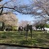 4月4日 公園