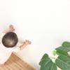 【赤ちゃんの誤飲】観葉植物を食べた!応急措置は?毒性のある植物も。