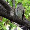 小型の鷹と安全保障