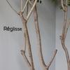 六本木フレンチ 洋食とジビエ〜Réglisse〜