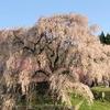 たった一本の桜が創り出す絶景!又兵衛桜(本郷の瀧桜)とおすすめ「ヒルトコカフェ」