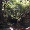 【すべて体験談】アメリカ・カリフォルニア(北部)のおすすめハイキング・スポット