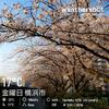 In Bloom 桜を追ってジンパしたい!/20190405の空