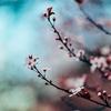 桜の季節から感じること