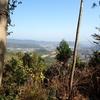 南山を登ってみよう その5 山頂の植物達