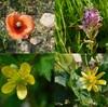 逆瀬川での花探し2(4月21日)