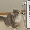 猫雑記 ~洗濯機の攻防~