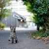 山口&高知ツーリング #路地の猫