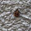 【虫、閲覧注意】虫や草木の観察