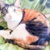 【愛猫日記】毎日アンヌさん#98