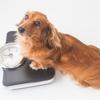 犬の肥満のリスクや肥満におススメの食材10選