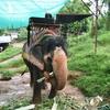 タイに行ったら食べるべき王道料理はコレ!?ゾウにも乗ってきたよ【レポート④:象乗り体験、タイ料理編】