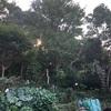 植えすぎの庭