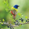 約130点の写真を紹介「世界で一番美しい鳥図鑑」