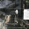 上野動物園に行って来た