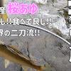 【鮎釣り#3~6】奈良県吉野川の鮎釣り