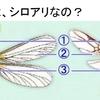 ~この羽ありは、シロアリなの? Q053~ 図解 屋根に関するQ&A