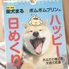 ポムポムプリンと世界一有名な柴犬「まる」の日めくりカレンダー