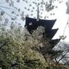 京都のオススメ花見スポット「東寺」で桜の見どころ場所5選