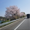 桜 ~spring2018~