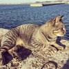 大貫港の夕日とネコさん。