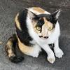 社長さんヒゲのタイ猫。今朝の散歩の時に撮影!