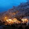 どうしていつもタイミングを外すのだろうと笑ってしまう、桜祭り。今年は屋台も出ないし経費削減だね