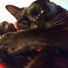 今日の黒猫モモ&白黒猫ナナの動画ー744