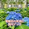 【豊平公園】紫陽花の咲く場所や見頃に園内マップ