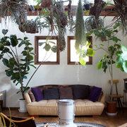"""家を建てたら「植物」にハマった。朝5時起きも苦にならないほど深い私の""""植物愛""""【趣味と家】"""