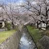 桜の季節はシェリーの季節