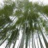 生駒北部の高山竹林園と国宝長弓寺