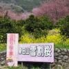 和宏さんの花巡礼 雪割桜