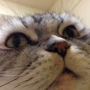 まんまるスコの老猫日記