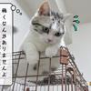 猫雑記 ~ケージの恐怖再び~