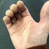 握り方seriesその3『遠位横アーチ』を使う有頭骨を中心とした縦アーチ・横アーチを解説・クライマー・武術家・一般の方々にもオススメです!!