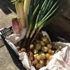ありがとうございます♡ひかりの種お野菜BOXの反響が予想以上!