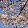 造幣局桜の通り抜けに行ってきたよ。