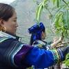 青花椒栽培で貧困から脱却した四川の山村