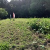 在宅勤務とフレックスで時間を有効に使おう! ー草刈り編ー