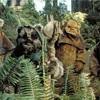 Ewokの森へ