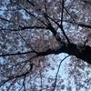 空の中の桜色