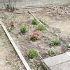 花壇を作る