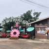 Red Lotus Floating Market(レッドロータスフローティングマーケット)で蓮の花とフォトジェニック写真を撮る