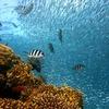 【紫外線吸収剤と紫外線散乱剤】その違いとは?日焼け止めの成分が珊瑚に有害!?