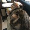 飼い主に気を遣うネコ