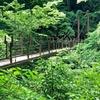 高尾山 4号路コース 樹木が茂る山道 中腹まで下山、唯一の 吊り橋 そして 苔、毛虫...