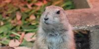 こども動物自然公園で写真をたくさん撮ってきた!