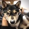 【肉球付きメガネ】メガネの愛眼で愛犬家用メガネをゲット!